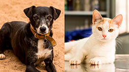 Adopt a friend: pets waiting for a new home
