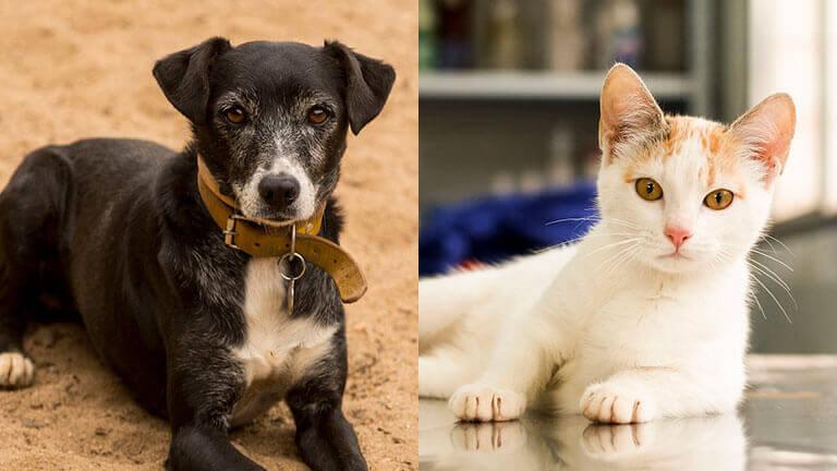 Animals rescued after the Fundão dam rupture. Photo: Leo Drumond / NITRO
