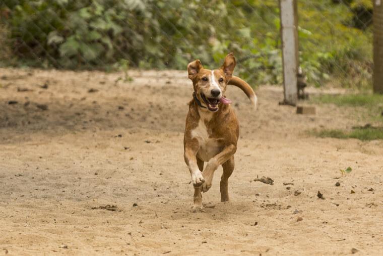 Trabalho de castração de animais abre oportunidade para novas adoções.
