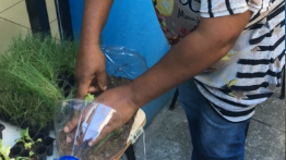 Mariana residents participate in pilot project to create vertical vegetable gardens at home