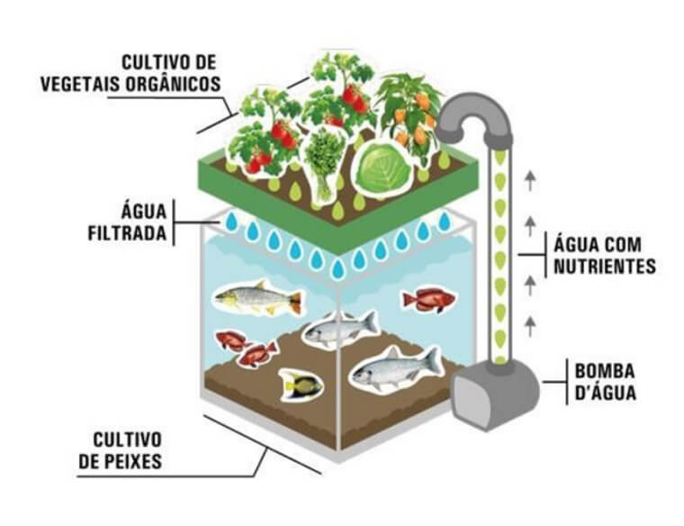 Aquaponics project, which integrates pisciculture and hydroponics, to be put into practice in Espirito Santo.
