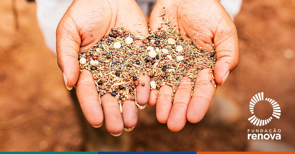 As inovações na recuperação de solos e áreas degradas são fundamentais para a economia de baixo carbono