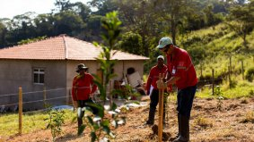 Replantiation of fruit trees in properties affected by the rupture of the Fundão dam
