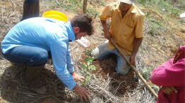 Planting of more than 300 thousand seedlings along the springs of the Doce River has started.