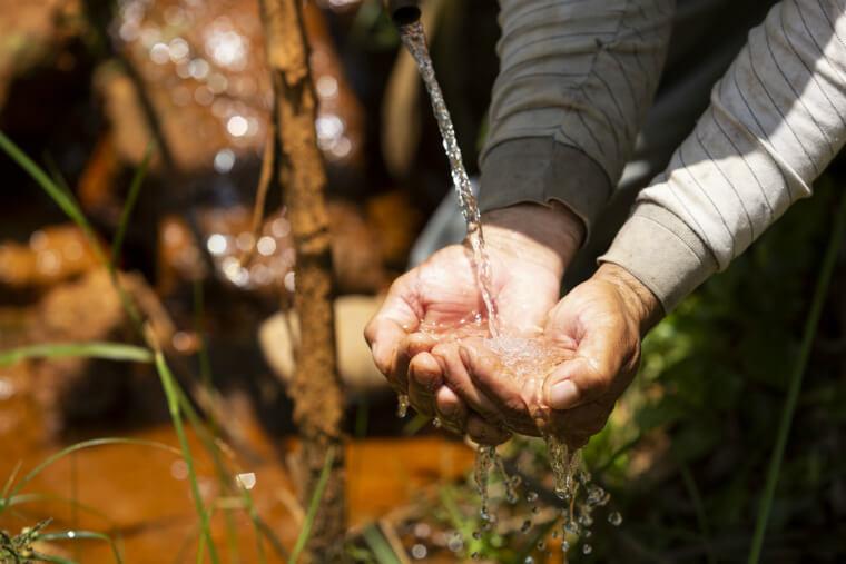 recuperação de nascentes na bacia do rio doce